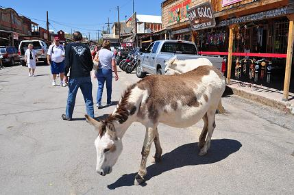 59755-oatman3.jpg