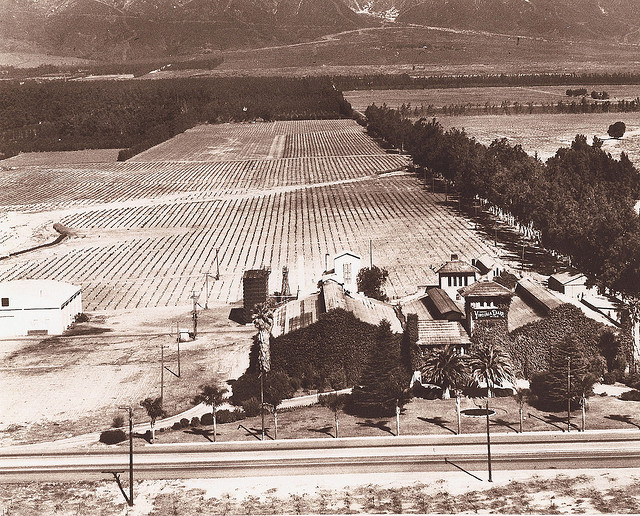Virginia Dare Winery 1910