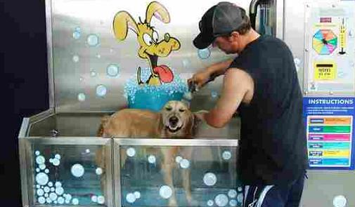 61994-DogWash2.jpg
