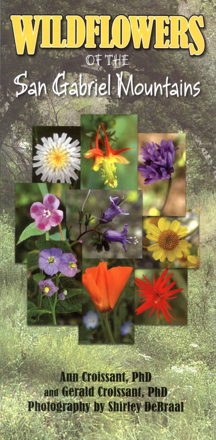 7742-WILDFLOWERS book cover.jpg