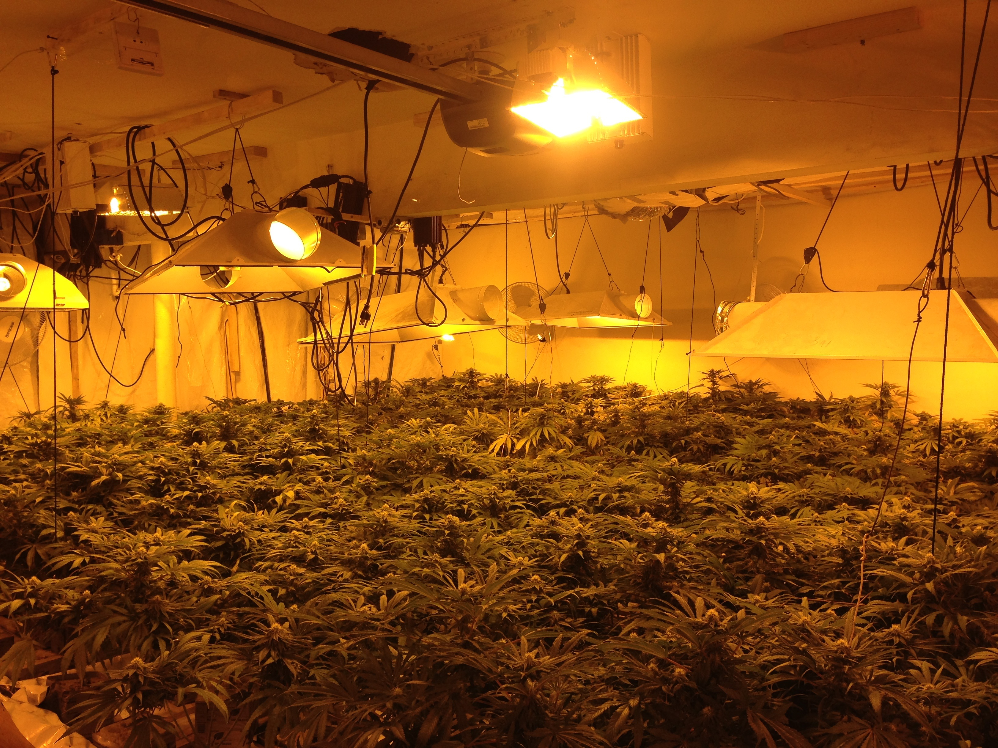 Indoor marijuana grows found in two arcadia homes three for Cannabis interieur